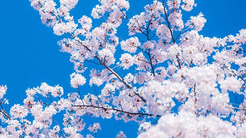 4月の時候の挨拶~上旬/中旬/下旬の手紙の書き出しや結び